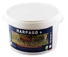 harpagophytum et cassis